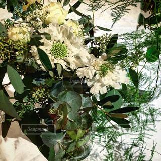 植物の花の花瓶の写真・画像素材[1652201]