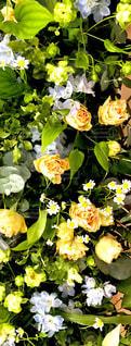 花のクローズアップの写真・画像素材[2106385]