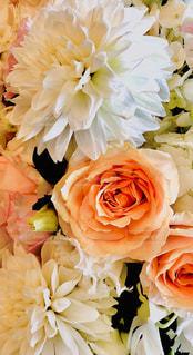 お花の写真・画像素材[2441752]