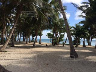 サイパンの景色  ヤシの木と海の写真・画像素材[1271432]