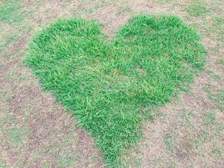ハートの芝の写真・画像素材[1358758]