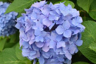 花の写真・画像素材[135956]