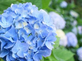 花の写真・画像素材[135957]