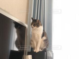 猫の写真・画像素材[1746617]