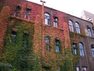 秋の紅葉が美しい北海道大学キャンパスの写真・画像素材[1296006]