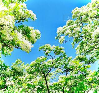木のクローズアップの写真・画像素材[3959294]