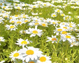 草で覆われた畑の上に座っている花瓶の写真・画像素材[3959351]