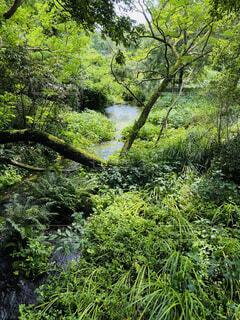 緑豊かな森の近くの写真・画像素材[3961189]