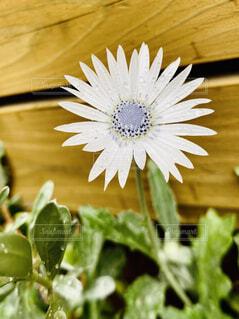 花のクローズアップの写真・画像素材[3961194]