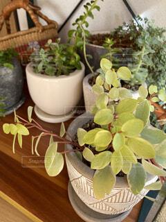 趣味の観葉植物の写真・画像素材[3978329]