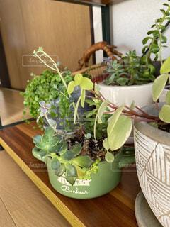 趣味の観葉植物の写真・画像素材[3978330]