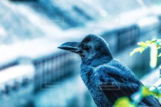 野鳥 - No.256533