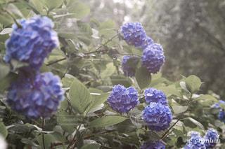 自然 - No.593807