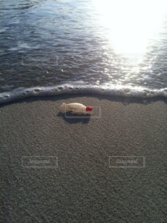 打ち上げられた魚の写真・画像素材[1275911]