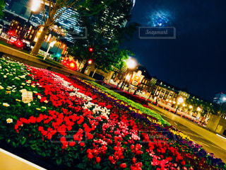 夜の街の景色の写真・画像素材[1280030]