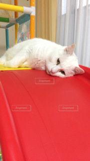 猫の写真・画像素材[129348]