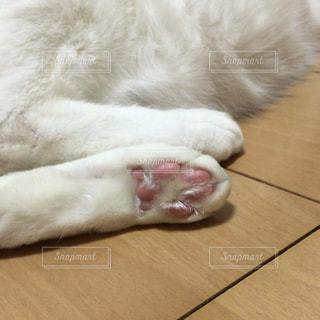 猫の写真・画像素材[129349]