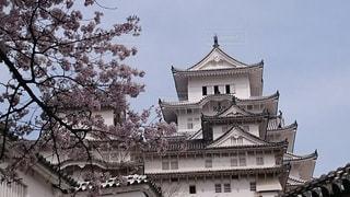 姫路城を下からのアングルで桜満開の写真・画像素材[1277973]