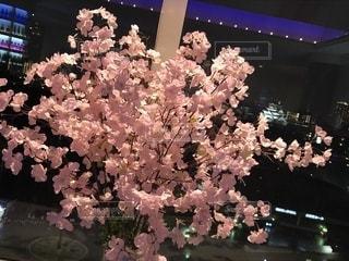 植物にピンクの花の写真・画像素材[1860865]