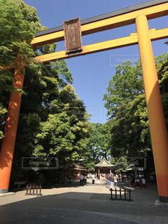 川越氷川神社の写真・画像素材[1283435]