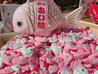 良い人に巡りあい鯛の写真・画像素材[1283440]