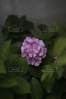 自然の写真・画像素材[12940]