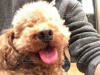 犬の写真・画像素材[55605]