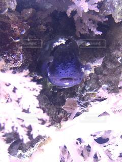 珍しい色の魚の写真・画像素材[1277630]