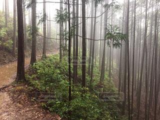 雨の中の熊野古道の写真・画像素材[1285817]