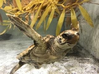 水の下で泳ぐ海亀の写真・画像素材[1277755]