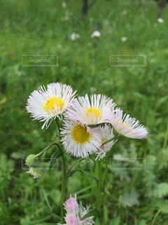 自然の写真・画像素材[40594]