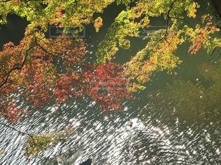 近くに池のアップの写真・画像素材[1613962]