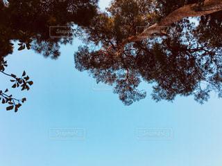 木の写真・画像素材[2305200]