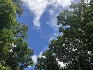 木と空の写真・画像素材[2315679]