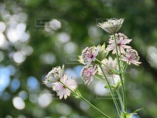 お花の写真・画像素材[2315697]