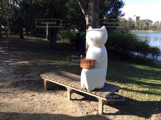 公園のベンチに猫座ってたの写真・画像素材[1873788]