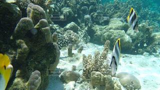 タヒチ タハア島の海の中の写真・画像素材[1283573]