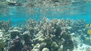 タヒチ タハア島の海の中の写真・画像素材[1283574]