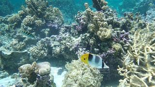 タヒチ タハア島の海の中の写真・画像素材[1283575]