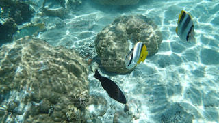 水の中を泳ぐ鳥の写真・画像素材[1283576]