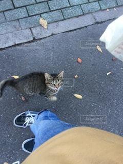 猫の写真・画像素材[70489]