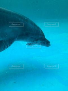 イルカの食事の写真・画像素材[1279596]