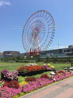 花と円と空の写真・画像素材[1279718]