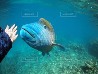 水面下を泳ぐ魚たちの写真・画像素材[1280014]