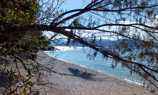 海と木の写真・画像素材[1280018]