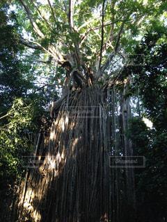 フォレスト内のツリーの写真・画像素材[1280074]