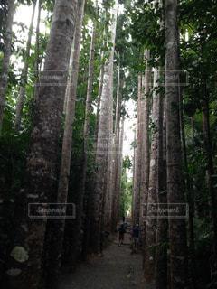 フォレスト内のツリーの写真・画像素材[1280606]