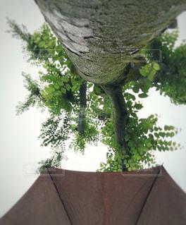 雨だから撮ってみたの写真・画像素材[1287683]