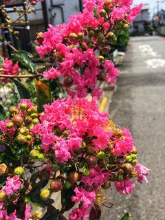 夏の日の散歩の写真・画像素材[1311804]