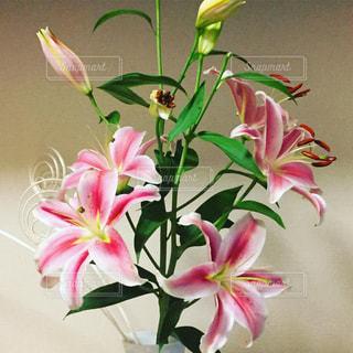 百合の花の写真・画像素材[1283168]
